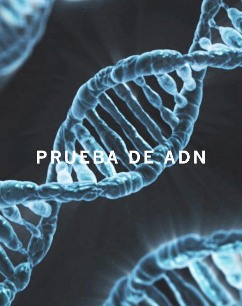producto-PRUEBA-ADN