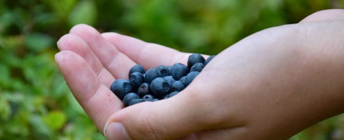 blueberries-1652422_1920